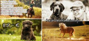 Hundangebot.jpg